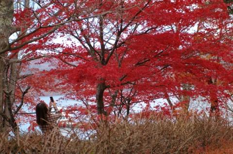 山中湖で紅葉を撮る女性