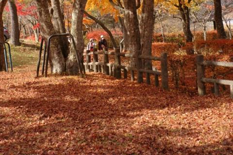 山中湖紅葉の絨毯