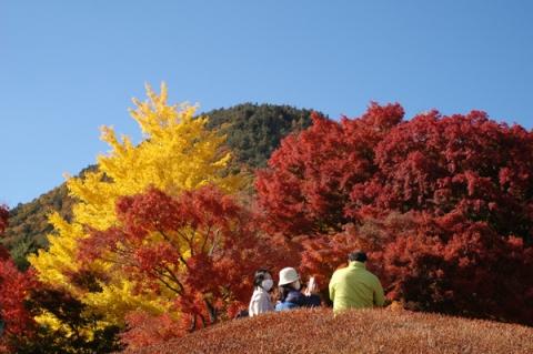 河口湖もみじ回廊の紅葉と黄葉