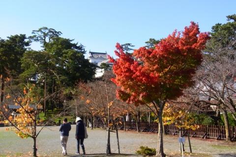 小田原城址公園の紅葉