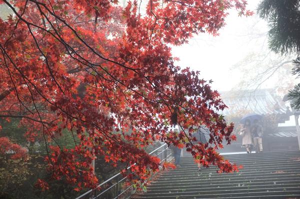 霧に霞む紅葉と階段を降りる男女
