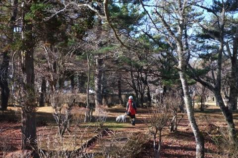 冬木立ちの山中湖畔