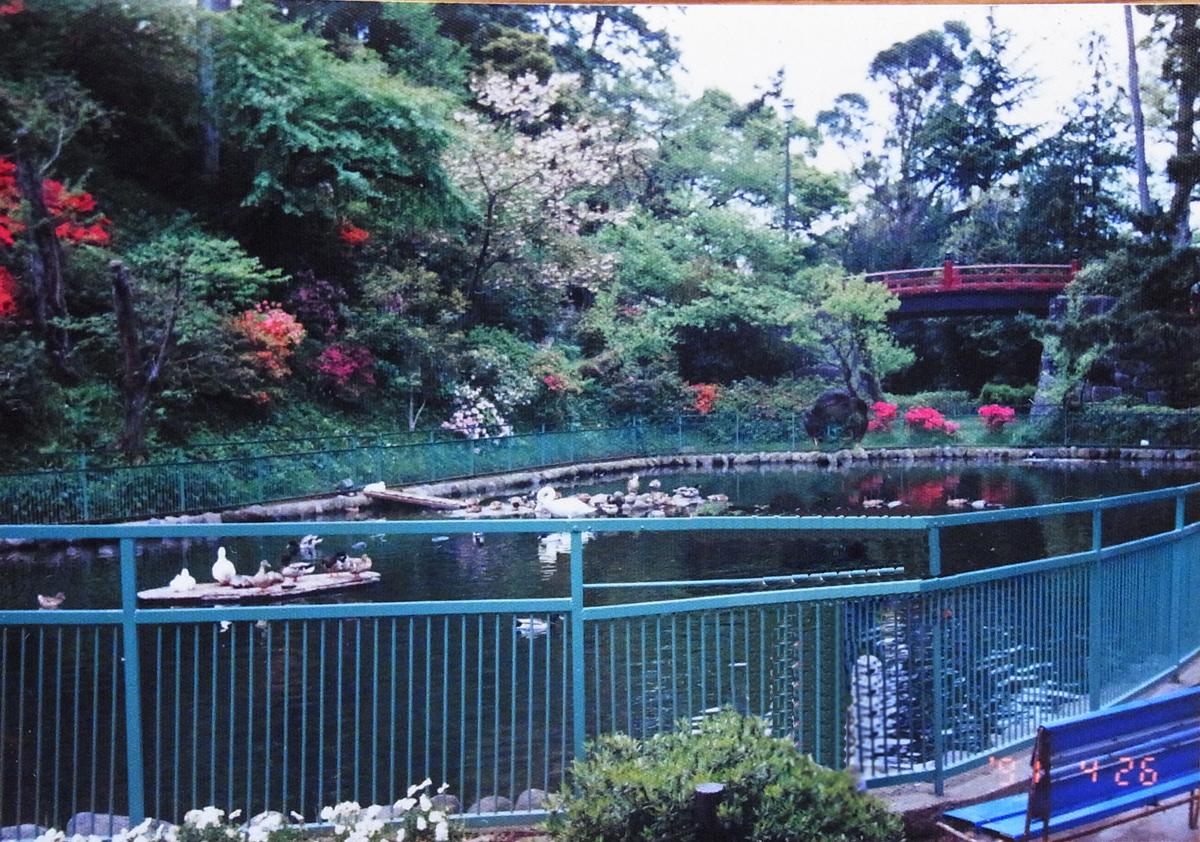 小田原スナップ1991年の水鳥が飼われていた小田原城東堀