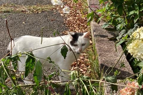 元箱根で見た猫