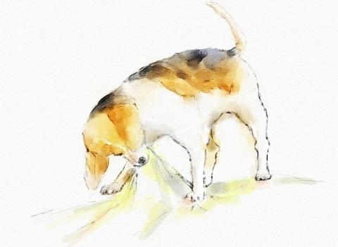 ビーグル犬3_ak__bak