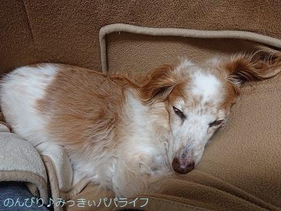 hizamickey202003.jpg