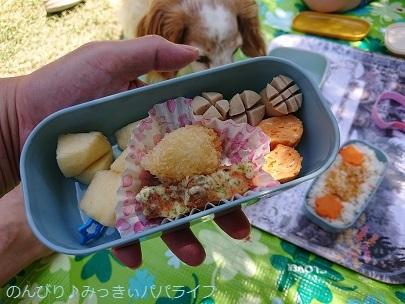 lunchboxniwa05.jpg