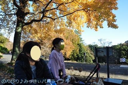 momijiminaito2020023.jpg