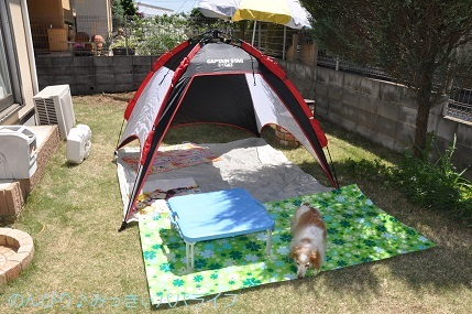 picnic20200502.jpg