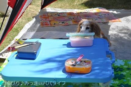 picnic20200504.jpg