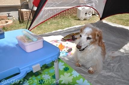 picnic20200505.jpg