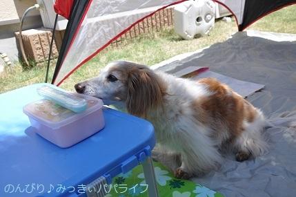 picnic20200506.jpg