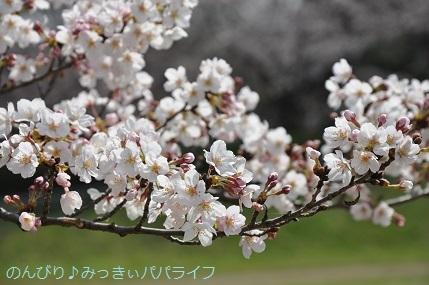 sakura20200307.jpg