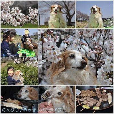 sakura20200321-1.jpg