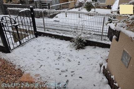 snow20200305.jpg