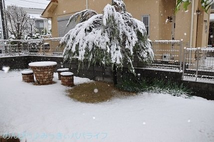 snow20200307.jpg