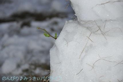 snow20200316.jpg