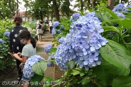 toshimaen84.jpg