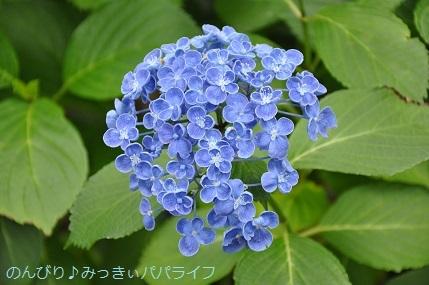 toshimaen87.jpg