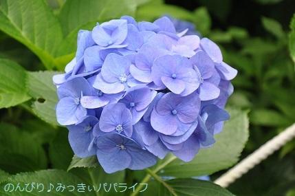 toshimaen88.jpg