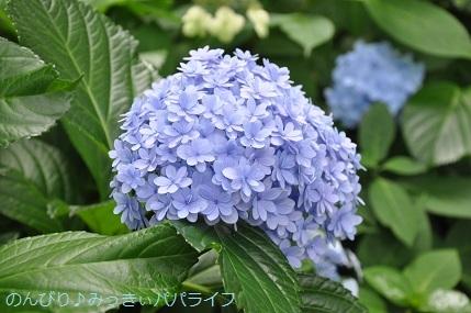 toshimaen89.jpg