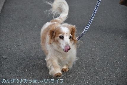 yakitori20200301.jpg