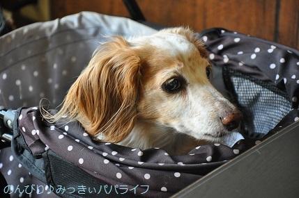 yakitori20200608.jpg