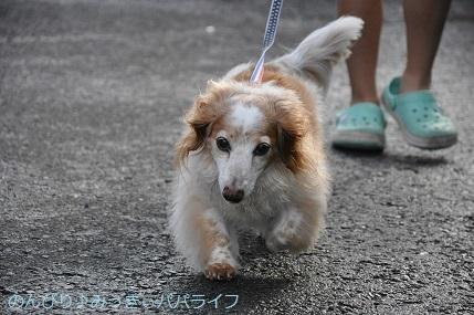 yakitori20200702.jpg