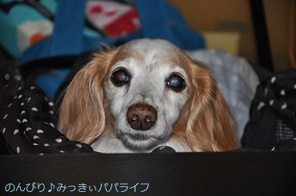yakitori20201001.jpg