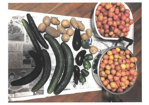 2020年6月野菜、梅収穫