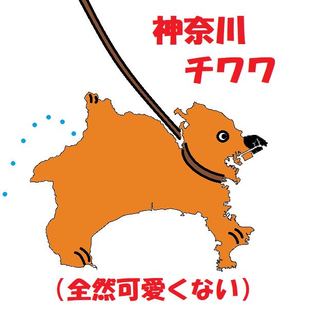 d神奈川チワワ(全然可愛くない