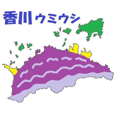 d香川ウミウシ