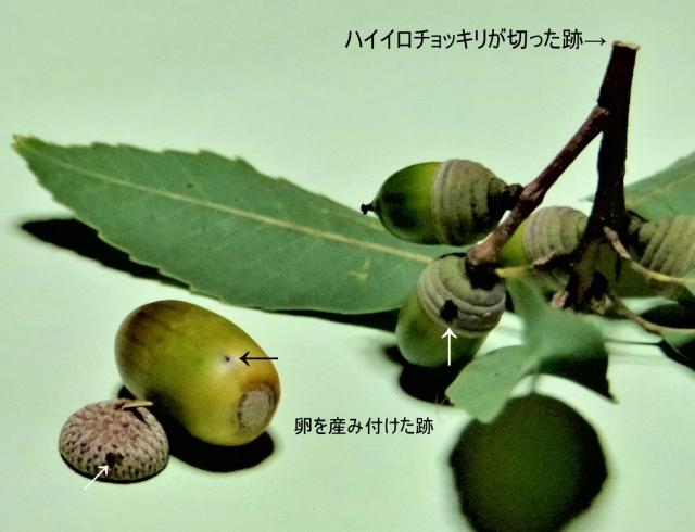 ☆IMGP3371