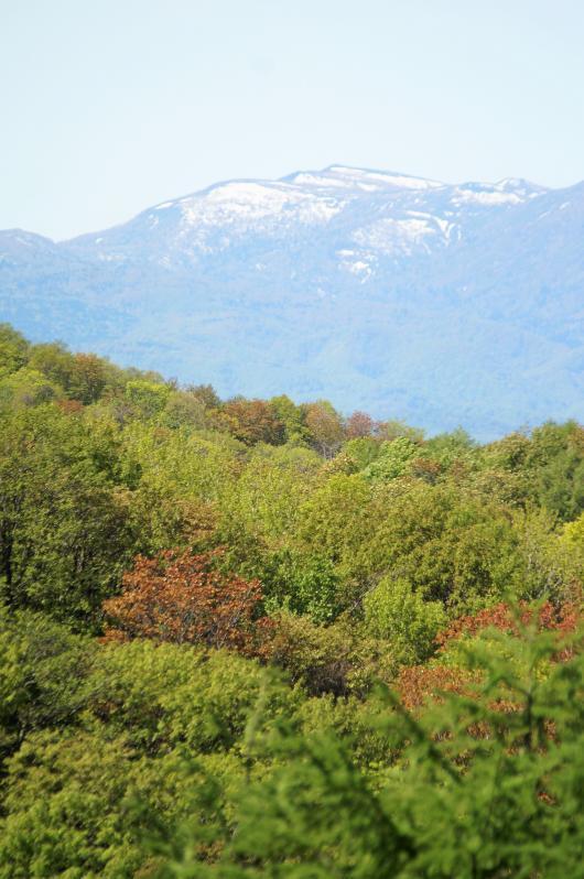 山と春紅葉1(1)