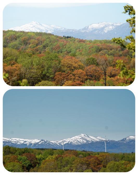 山と春紅葉2(1)