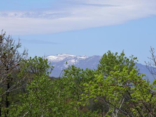山と春紅葉3(1)