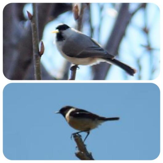 野鳥1(1)