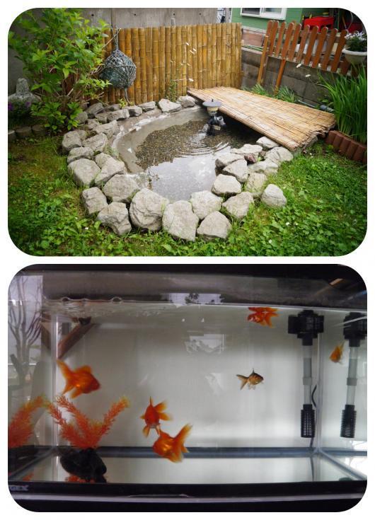池2(1)