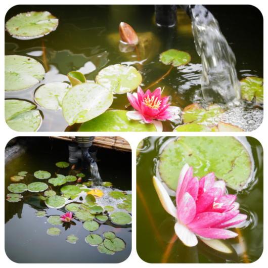 池4(1)