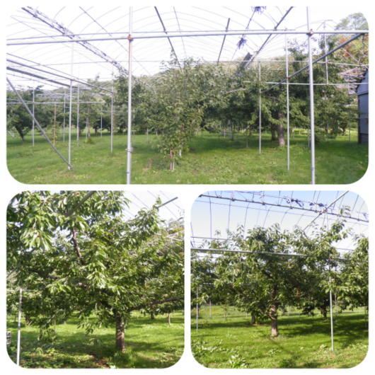 果樹園4(1)
