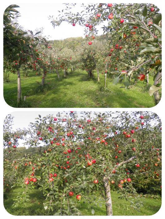果樹園5(1)