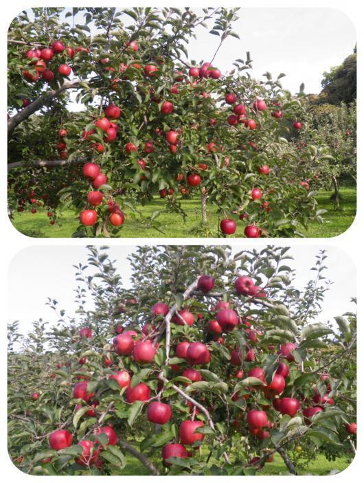 果樹園6(1)