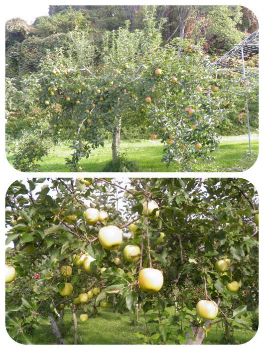 果樹園7(1)