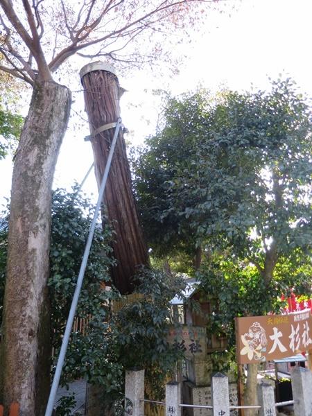 伊奴神社の御神木