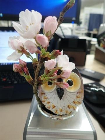 2020,3,26桜