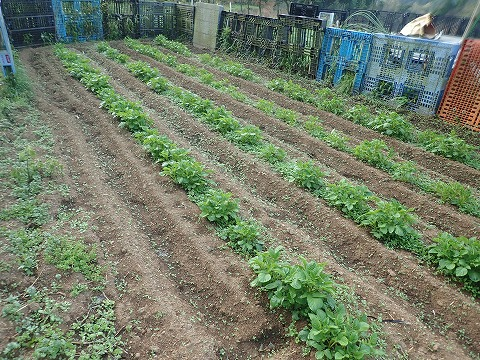 2020,4,5菜園