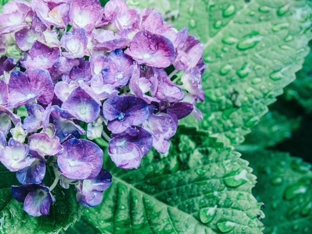 浜田省吾『紫陽花のうた』を考察してみる サムネイル画像