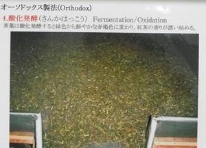 fermention