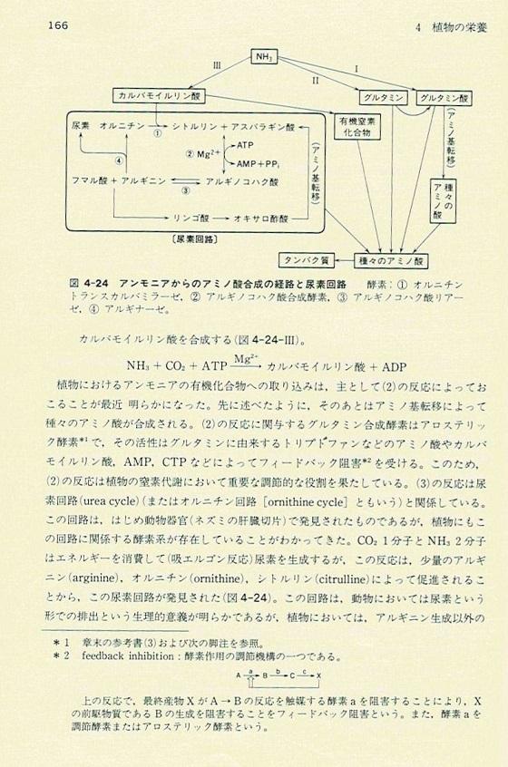 尿素回路2