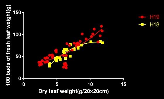 H18H19芽重比較-2